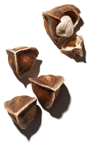 สารสกัด Moringa